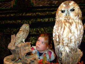 in het museum zijn opgezette dieren van dichtbij te zien