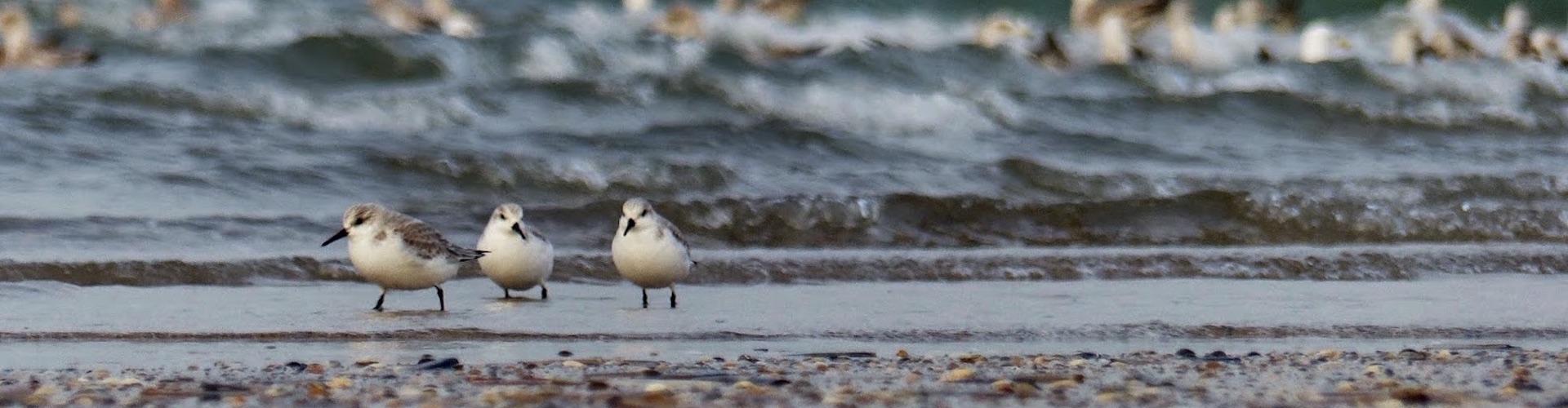 vogels-strand