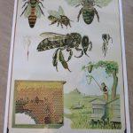 Landelijke Zaaidag voor bijen en vlinders op de Kinderboerderij Velserbeek