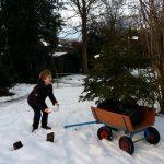 Adoptie-kerstbomen gaan weer de koude grond in: tot in december!