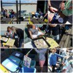 Aktiviteiten met Pieter Vermeulen Museum bij Clean up the Beach!